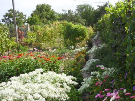 Na predaj záhrada s domom v Novej Stráži Okres Komárno LRo-PN-933